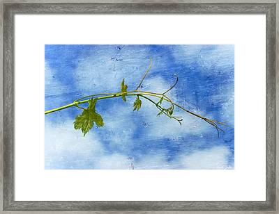 Reaching Out Framed Print by Heidi Smith