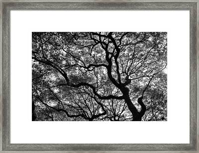 Reaching To The Heavens Framed Print