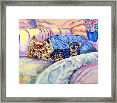 Ready For Bed - Yorkshire Terrier Framed Print by Lyn Cook
