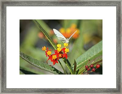 Framed Print featuring the photograph Ready For Flight by Jerry Cahill