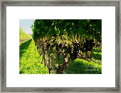 Ready For Harvest Framed Print by Gladys Steele