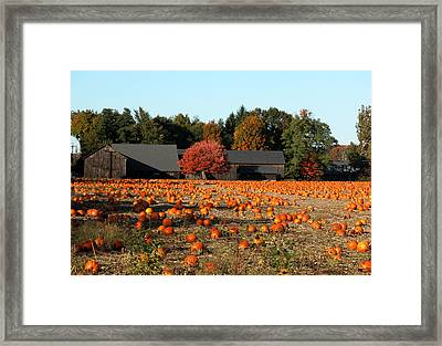 Ready For Pickin Framed Print by Kenneth Drylie