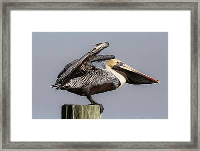 Ready For Take Off Framed Print by Paulette Thomas