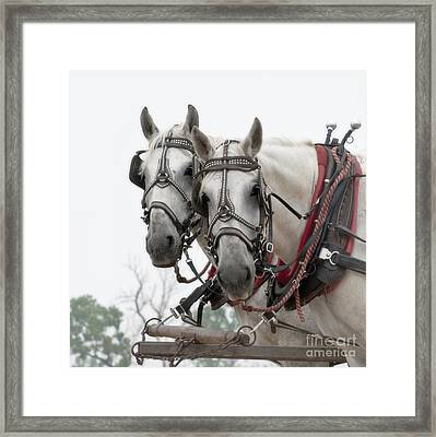 Ready Framed Print by Fred Lassmann