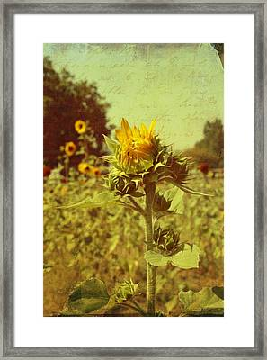 Ready To Bloom Framed Print by Cathie Tyler