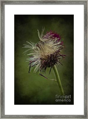 Ready To Fly Away... Framed Print by Clare Bambers
