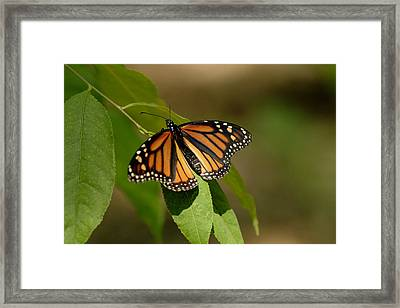 Ready To Fly Framed Print by Dean Bennett
