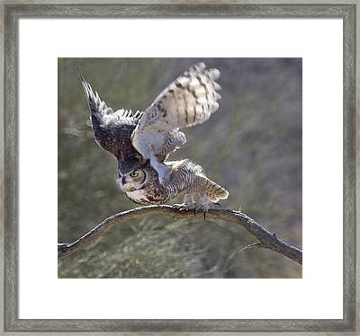Ready To Fly Framed Print by Elvira Butler