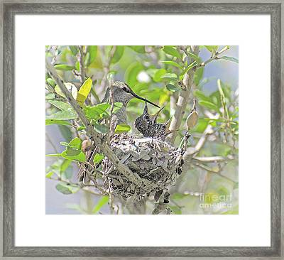 Ready To Fly  Framed Print by Judy Grant