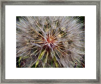 Ready To Ride On The Wind Framed Print