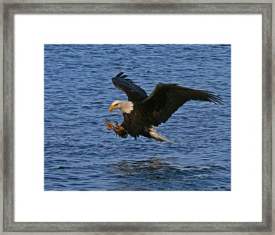 Framed Print featuring the photograph Ready To Strike by Doug Lloyd