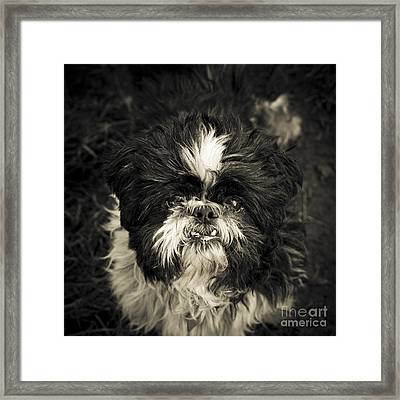 Real Character Framed Print by Jay Taylor