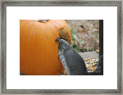 Framed Print featuring the photograph Real Hungry Squirrel by Mark McReynolds