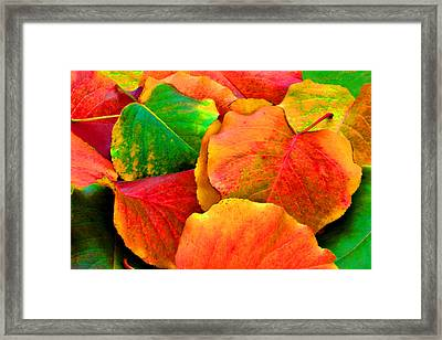 Really Colorful Fall Leaves Framed Print