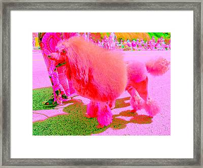Really Pink Poodle Framed Print by Randall Weidner