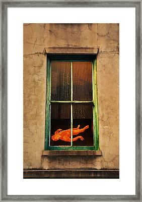 Rear Window Framed Print by Bill Cannon