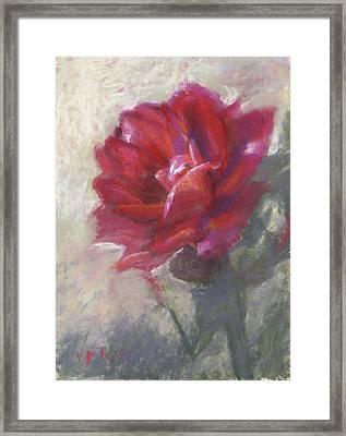 Reba's Rose Framed Print