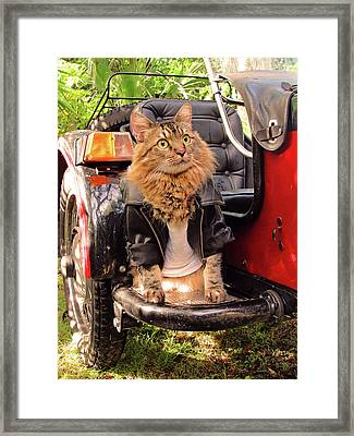 Rebel Framed Print by Joann Biondi