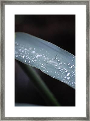 Recent Rain Framed Print by Dickon Thompson