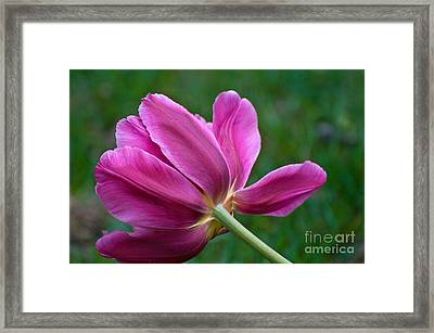 Reclining Framed Print
