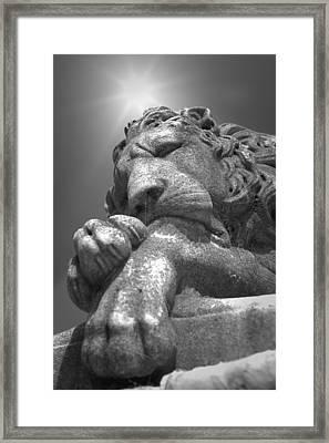Recoleta Lion Framed Print