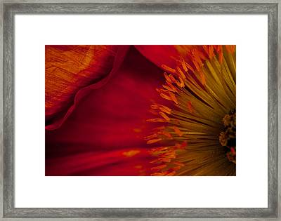 Red Addiction Framed Print