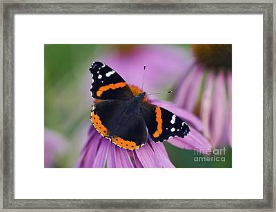 Red Admiral - D007656 Framed Print