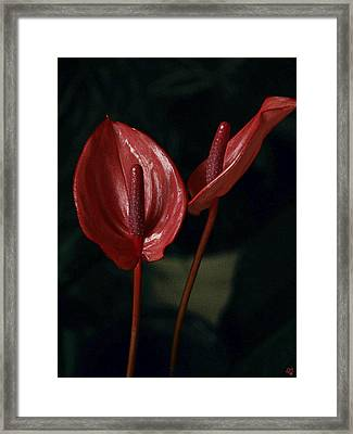 Red Again Framed Print by Barbara Middleton
