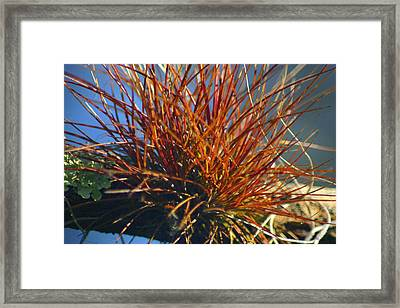 Framed Print featuring the photograph Red Air Plant by Jeanne Andrews