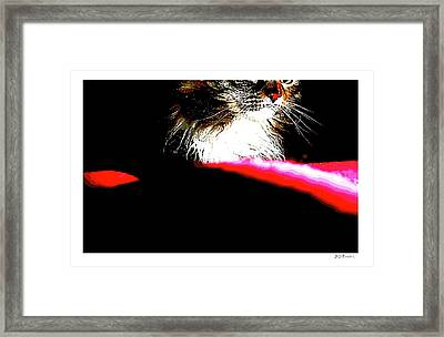 Red And Black And Cat Framed Print by Brian D Meredith