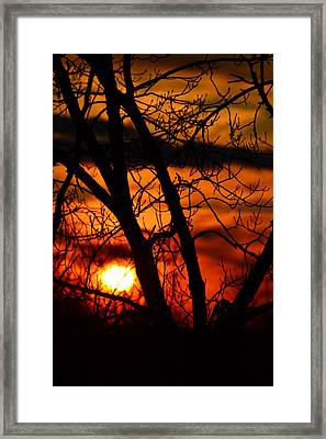 Red And Gold Framed Print by Bonnie Myszka