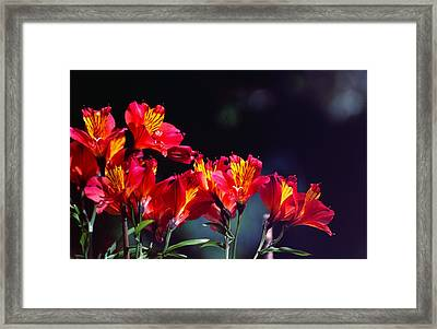 Red And Gold Framed Print by Peter Jenkins