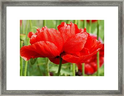Framed Print featuring the photograph Red And Green by Fotosas Photography