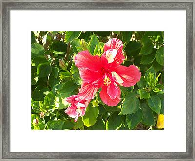 Red And Green Framed Print by James Flynn