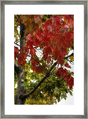 Framed Print featuring the photograph Red And Green Prior X-mas by Michael Frank Jr