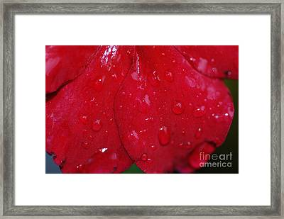 Red And Wet Framed Print by Paul Ward