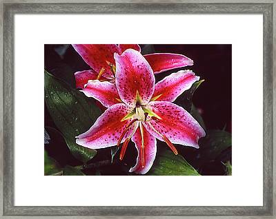 Red And White Lilie Framed Print by John Brink