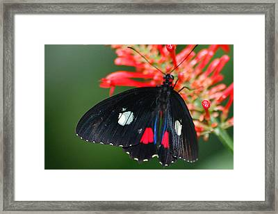 Red And White Spots Framed Print