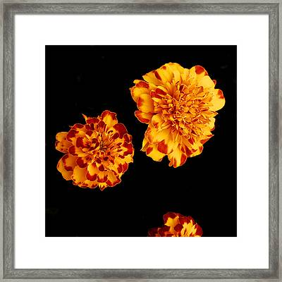 Red And Yellow Framed Print by Barry Shaffer