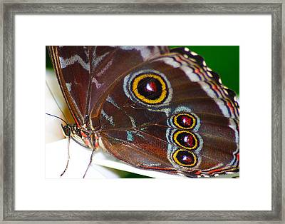 Red And Yellow Eyes Framed Print by Scott Hovind