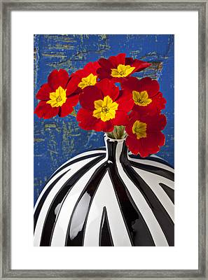 Red And Yellow Primrose Framed Print by Garry Gay