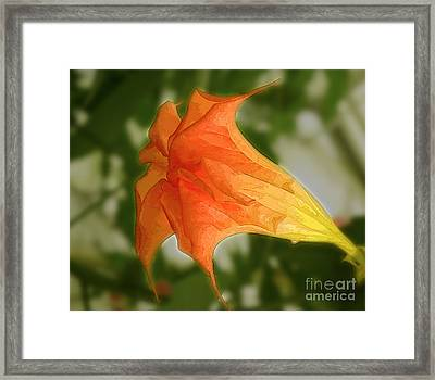 Red Angels Trumpet Flower Framed Print