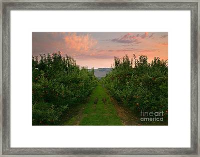 Red Apple Sunset Framed Print by Mike  Dawson