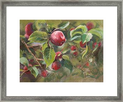Red Apples Framed Print by Synnove Pettersen