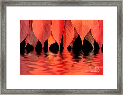 Red Autumn Leaves In Water Framed Print