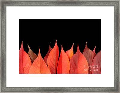 Red Autumn Leaves On Edge Framed Print