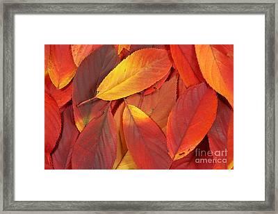 Red Autumn Leaves Pile Framed Print