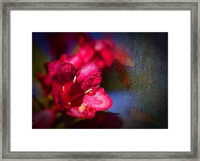 Red Bambino Framed Print by Gennadiy Golovskoy