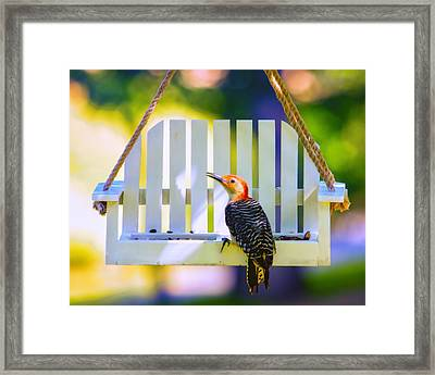 Red-belly Comes For Lunch Framed Print by Bill Tiepelman