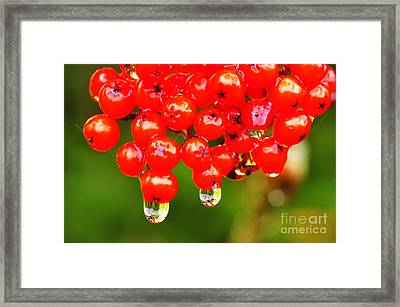Red Berries And Raindrops Framed Print by Thomas R Fletcher